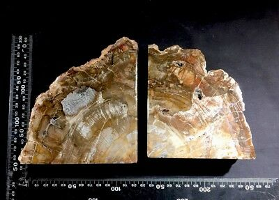araucarioxylon 2.7 Kg Triassic Agatised Wood Bookends Great Value Free Uk Post