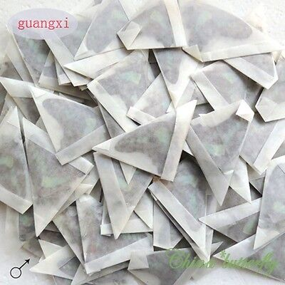 WHOLESALE green 50 unmounted butterfly Graphium sarpedon  materials artwork