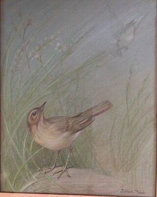 Original Bird Illustration By Listed Author/Artist Lillian Paca. Signed. Framed