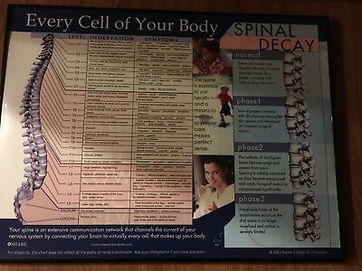 Chiropractic Poster Wall Chart Every Cell of Your Body Spinal Decay