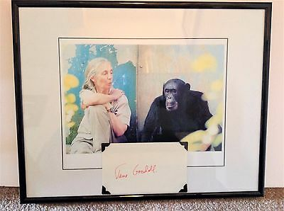 Jane Goodall Signed Framed Index Card Picture Display