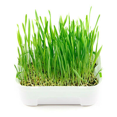 Brand New AFP Green Rush Cat Grass Kit for Helps Digestion&Prevent Hairball
