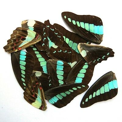 32 pcs REAL BUTTERFLY wing jewelry butterfly material ooak fairy artwork #2