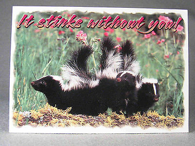 Skunk photographic postcard, by John Hinde Curteich and R. E. Barber.