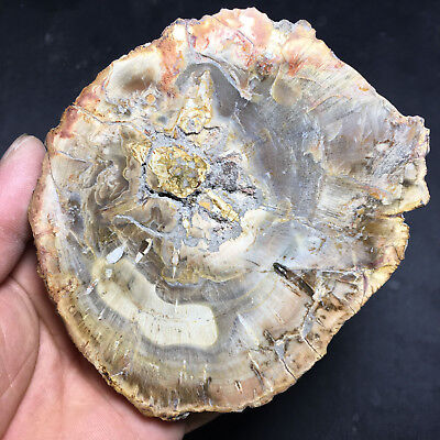 371g Beautiful Polished Petrified Wood Fossil Crystal Slice Madagascar 92603