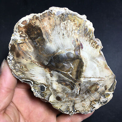 442g  Beautiful Polished Petrified Wood Fossil Crystal Slice Madagascar   102251