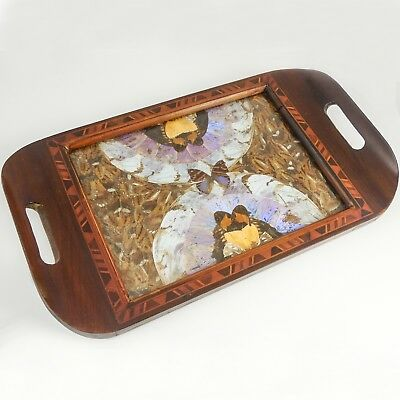 "Antique ""Butterfly Wing"" Exotic Inlaid Wood Tray — Souvenir of Rio de Janeiro"
