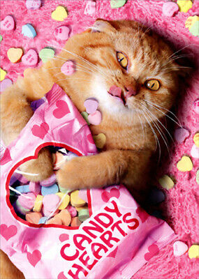 Avanti Sweetheart Cat Funny Valentines Day Card