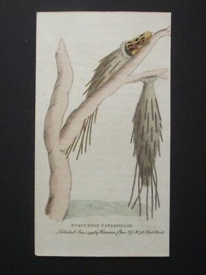 Porcupine Caterpillar - Harrison Cluse 1799 Hand Colored Copper Plate Engraving