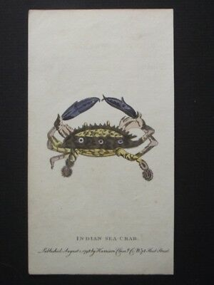 Indian Sea Crab - Harrison Cluse 1798 Hand Colored Copper Plate Engraving