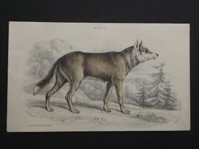 THE CAYGOTTE of MEXICO - LIZAR'S 1830's HAND COLORED COPPER PLATE ENGRAVING