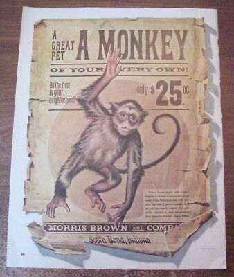 Original 1965 Ad,A Monkey,A Great Pet Of Your Very Own,Morris Brown and Company