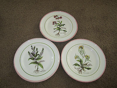Made in Italy Primula Set of 3 Herb Plates Pink Rim Green Inner Rim Hand Painted