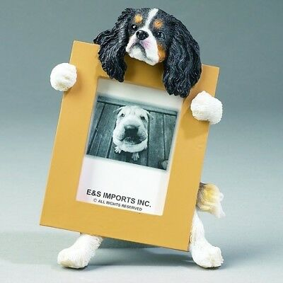 Cavalier King Charles Spaniel Tri Dog Picture Photo Frame