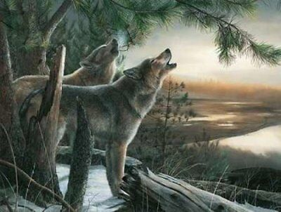 Call of the Wild by Kevin Daniel Wolf Print 19x13