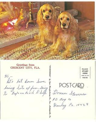 postcard Cocker Spaniels dogs Crescent City Florida Fl. sitting by fireplace