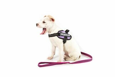 Julius-K9 Color and Gray Super-grip leash with handle, 20 mm x 1 m, pink-gray