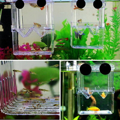 Fish Breeding Isolation Hanging Aquarium Accessories Incubator Box Tank S1
