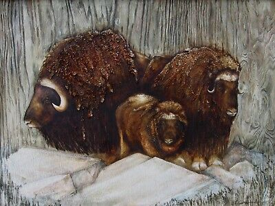 Wildlife Artic Muskoxen Musk Ox Canvas Gallery Wrap Listed by Artist