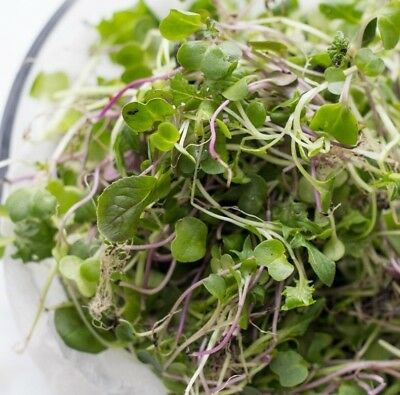 Micro Greens Sprouting Broccoli Grow Your Own Windowsill Salad Superfood 5g 10g