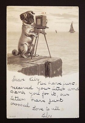 Vintage Postcard Pug Dog Camera Photographer St Andrews Rd Southampton Hampshire