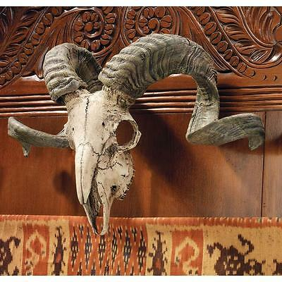 Corsican Ram Skull and Horns Wall Trophy Resin Den Office Collectible Decor