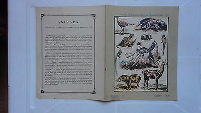 Ancien Protege Cahier Animaux Casino Ara Condor Tapir Chat Tigre Fourmilier