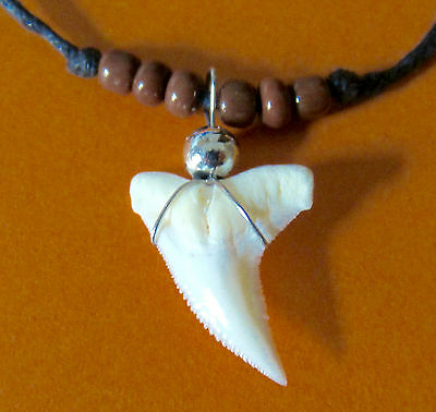 Real Tiger Shark Tooth Teeth Pendant Charm Necklace Adjust Cord Surfer Boy Girl