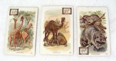 INTERESTING ANIMALS J Dwight Cow Brand Soda 1890s Victorian Trade Cards Lot of 3