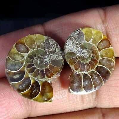 34.10Cts. 100% Natural Ammonite Fossil Nice Matched Cabochon Pair Gemstone