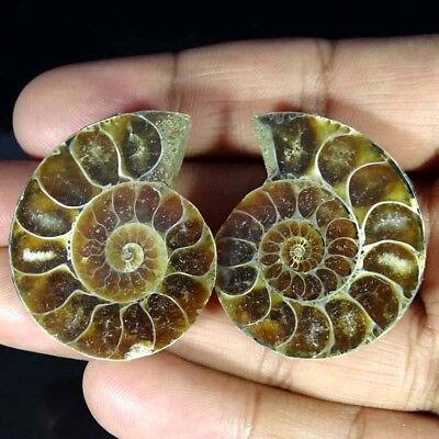 107.50Cts. 100% Natural Ammonite Fossil Nice Matched Cabochon Pair Gemstone