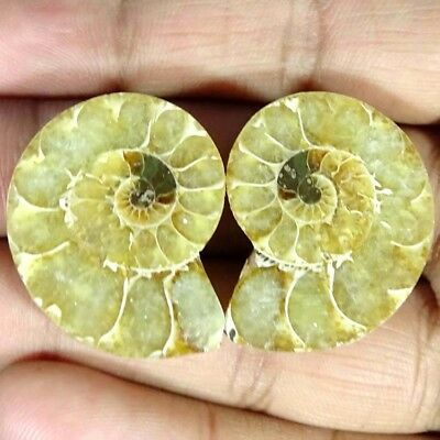 57.60Cts. 100% Natural Ammonite Fossil Nice Matched Cabochon Pair Gemstone