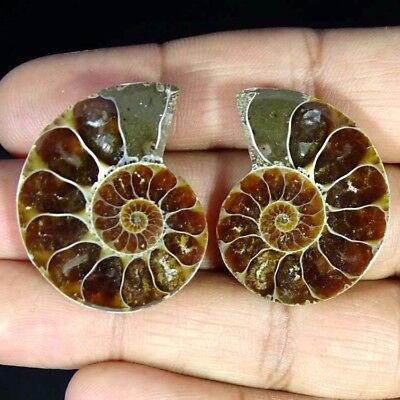 57.50Cts. 100% Natural Ammonite Fossil Nice Matched Cabochon Pair Gemstone
