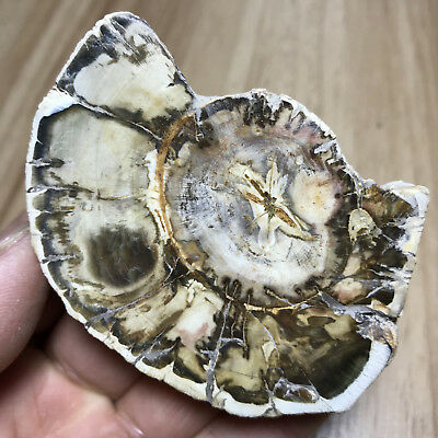 113g Beautiful Polished Petrified Wood Fossil Crystal Slice Madagascar 287