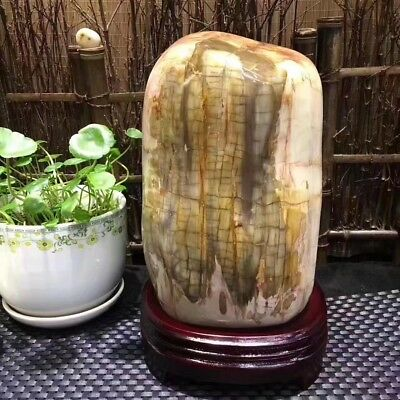 8500g  Beautiful Polished Petrified Wood Fossil Crystal Slice Madagascar  09