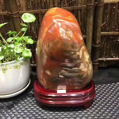 4950g  Beautiful Polished Petrified Wood Fossil Crystal Slice Madagascar  10