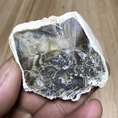 48g Beautiful Polished Petrified Wood Fossil Crystal Slice Madagascar 303