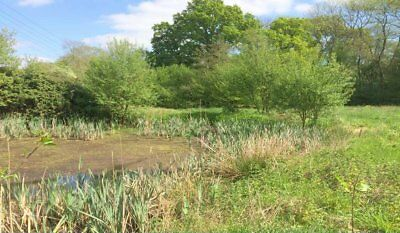 FERNHURST 6.5 acres, river frontage, amenity,fishing,woodland,direct road access