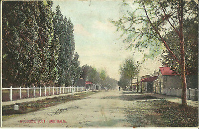 Postcard - Woodside, South Australia - 1913