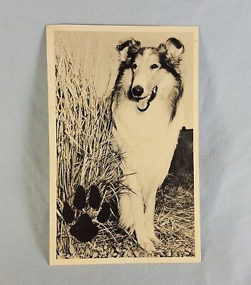 Campbell Soup Lassie Post Card