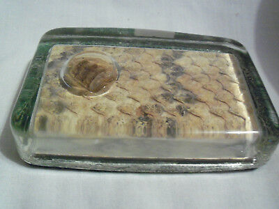 Real Rattlesnake Skin And Rattle Paperweight