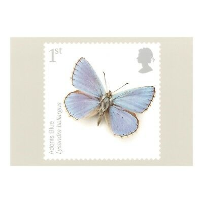 ADONIS BLUE Lysandra bellargus BUTTERFLY 2008 ROYAL MAIL SERIES PHQ 310 POSTCARD
