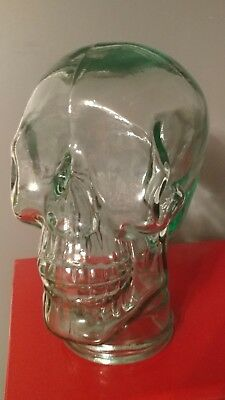 Large glass Skeleton Skull mannequin Head  Greenish Tint