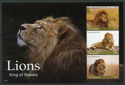 Gambia 2017 MNH Lions Lion King of Beasts 3v M/S Big Cats Wild Animals Stamps