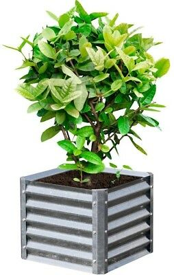 Galvanized Metal Planter Elevated Raised Bed 22 Inch x 22 Inch x 17 Inch Square