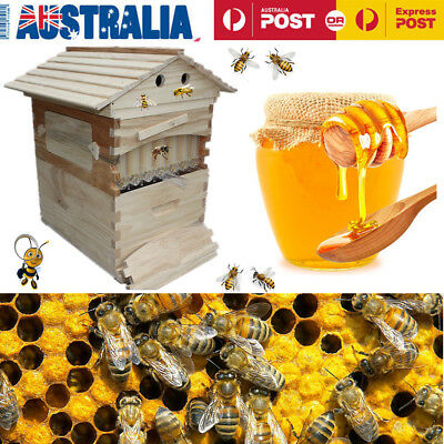 AU Wooden Beekeeping Beehive Brood House Box + 7pcs Auto Frames Honey Hive