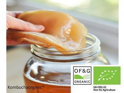 Organic Kombucha Scoby with Instructions And Small amount of Starter Tea. Scoby.