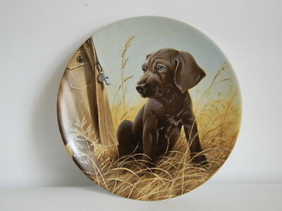 Vtg 1989 Collectible Decorative Knowles Command Performance The Weimaraner Kaatz