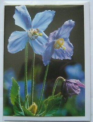 Cats Protection Greeting card Poppies charity item