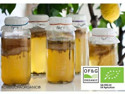 Organic JUN Champagne Kombucha Scoby Starter Tea  Probiotic Detox Weight Loss